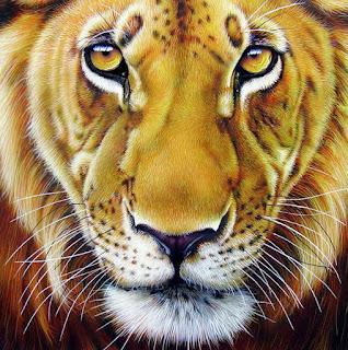 Cuadros Pinturas Oleo Animales