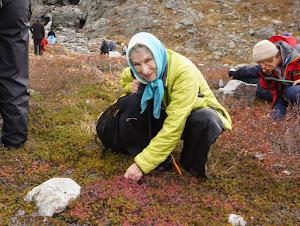 Picking blueberries in Ramah, Labrador