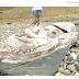 España.- Aparece un nuevo calamar gigante en la playa de la Arena, Pechón Cantabria