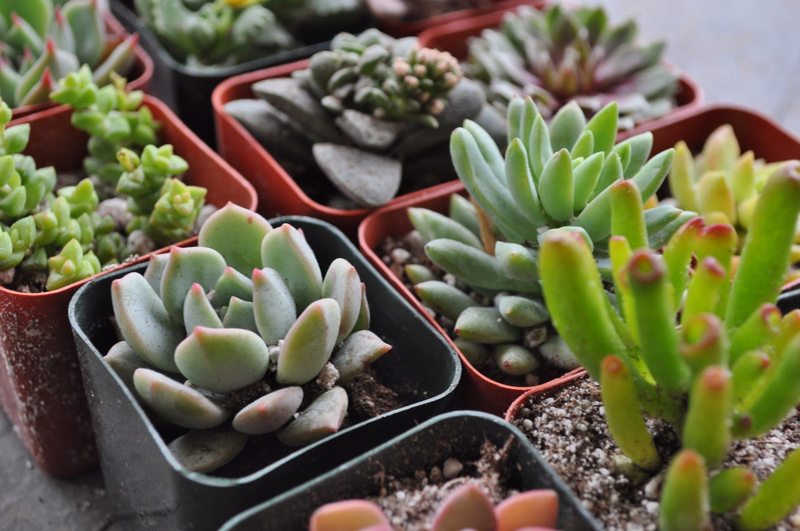 Jessicandesigns diy indoor succulent garden - Best indoor succulents ...