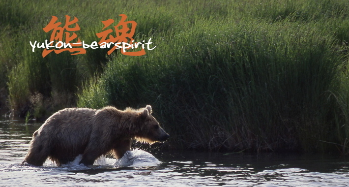 熊魂 yukon-bearspirit