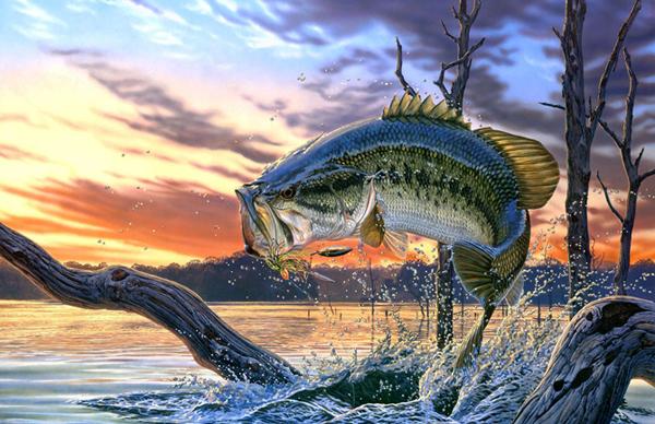 Despre pescuitul sportiv