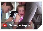 people getting puppies for christmas, i got a puppy for christmas, christmas puppy surprise, puppy for christmas present, people getting a puppy for christmas youtube