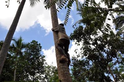 تسلق شجرة - العناية الحسينية بين مدعي التشيع وبين هندوسي