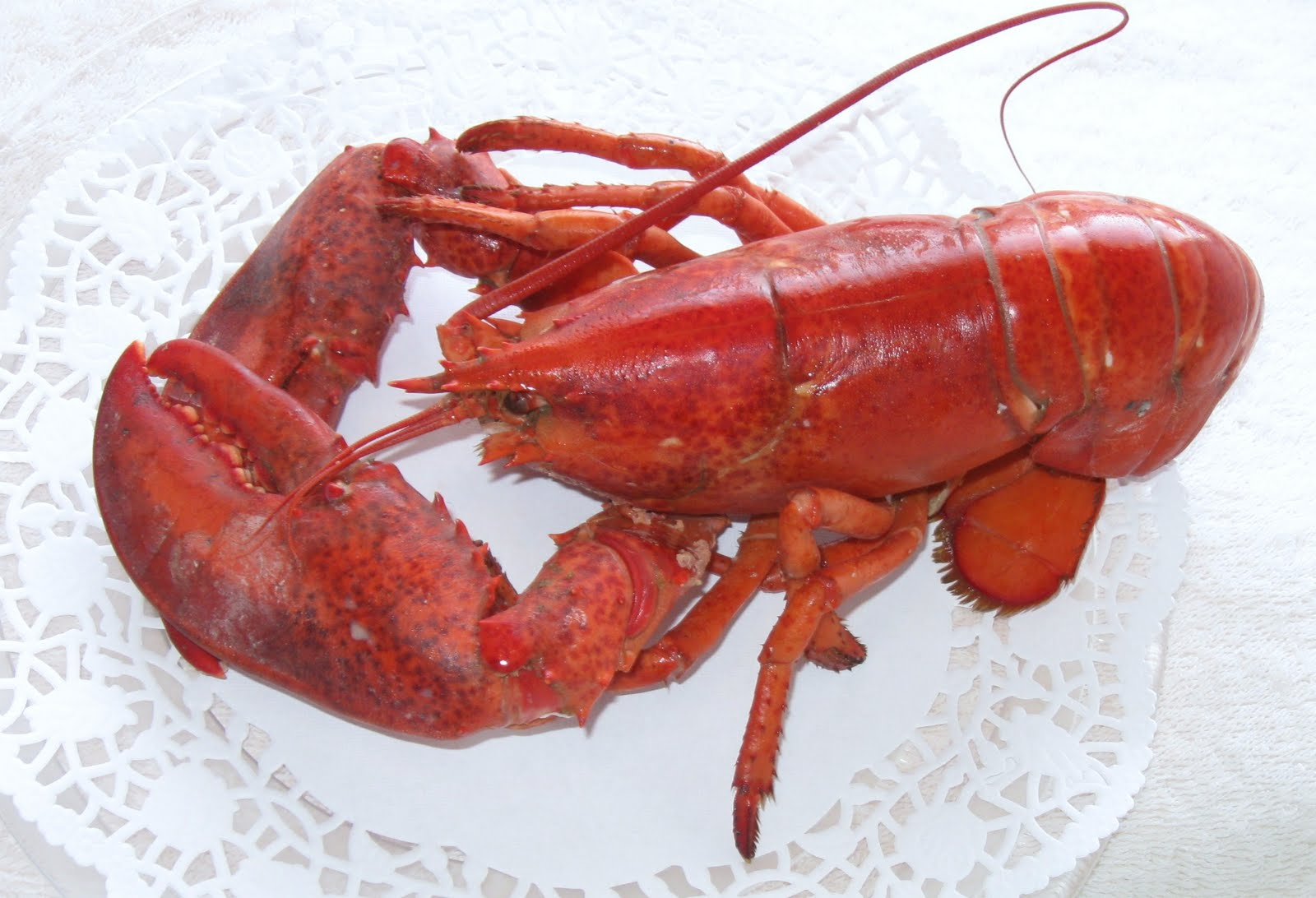 Marvelous-Canada: Lobster Season in Nova Scotia