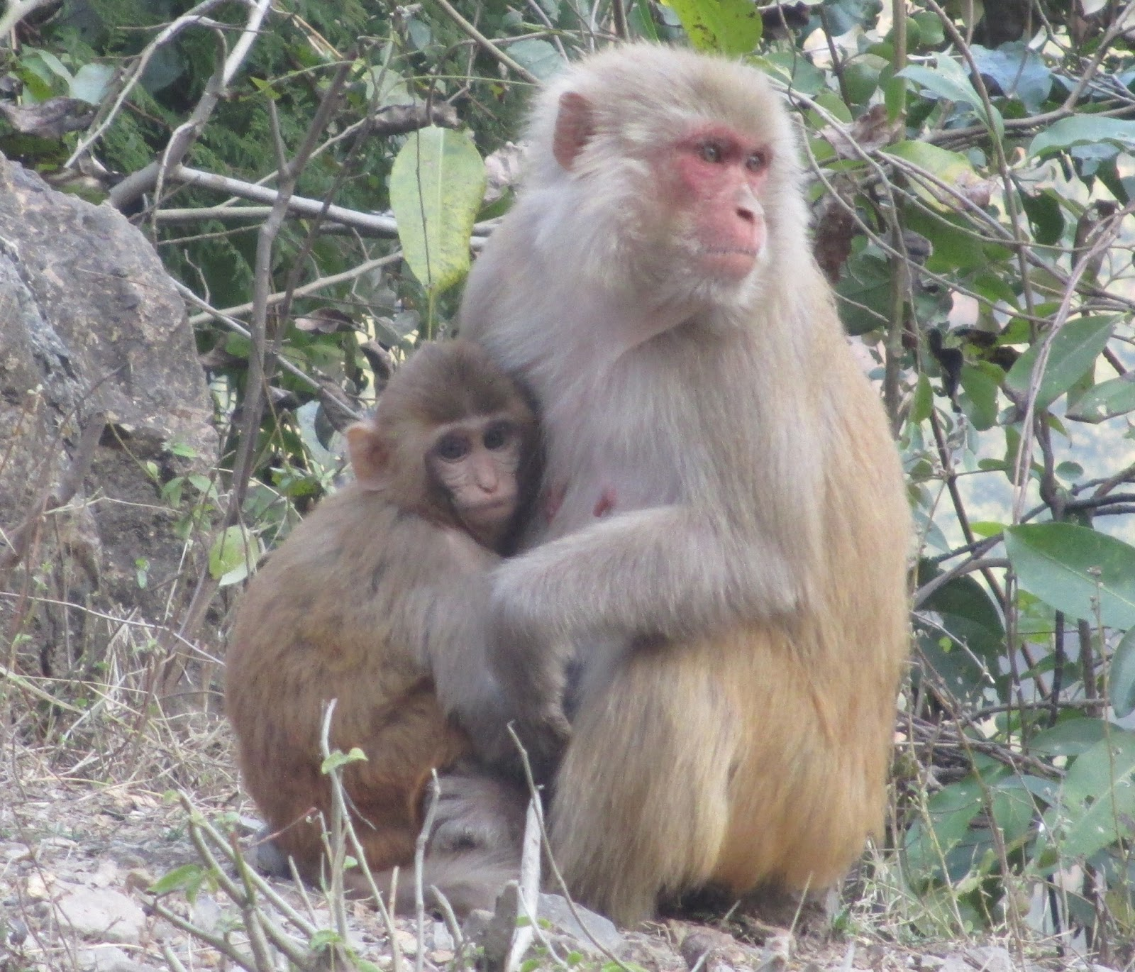 Monkeys In India Pics on Best E Learning Images On Pinterest A And The