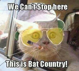 We can't stop here, this is bat country. Fear and Loathing in Las Vegas, by Hunter S. Thompson.