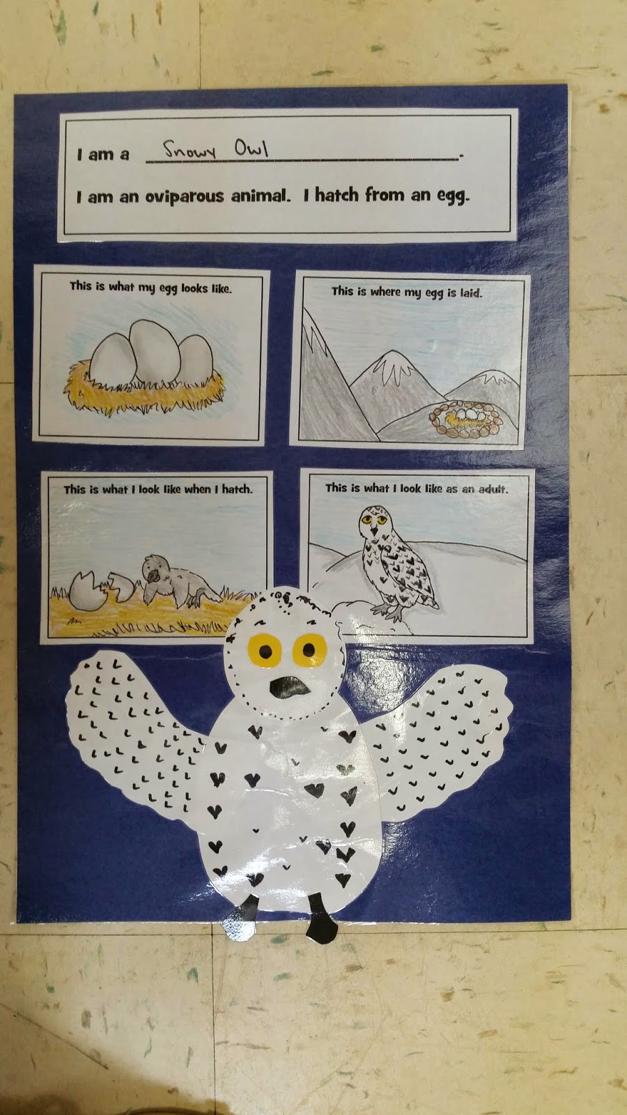 Image of: Activities If You Teach About Oviparous Animals In Your Class And Want To Know More About This Project You Check It Out By Clicking On The Image Below Mrs Ehles Kindergarten Connections Mrs Ehles Kindergarten Connections Oviparous Animals An Egg