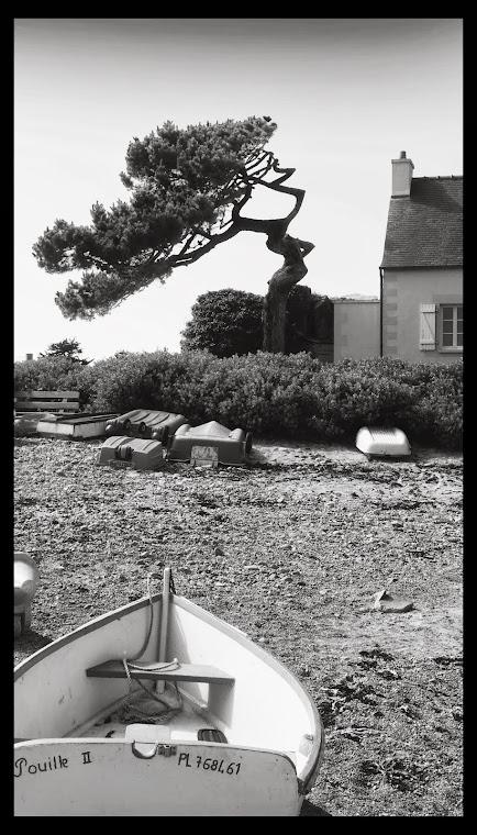 l'arbre calligraphe