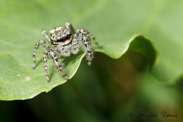 Macro d'insecte printemps araignée