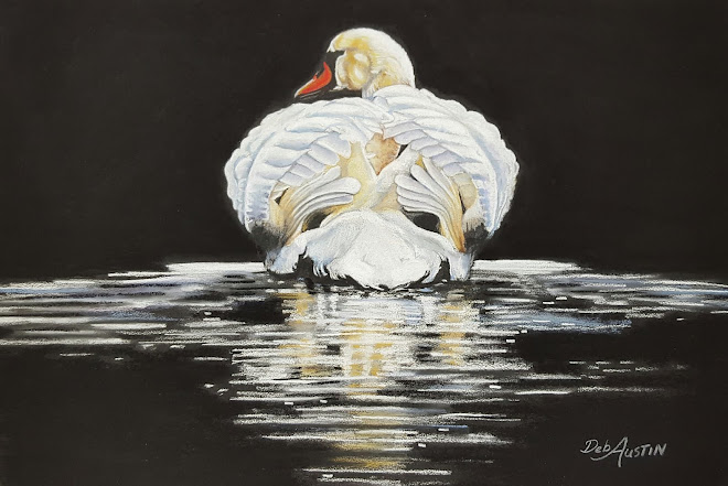 Swan Reflection (pastels)