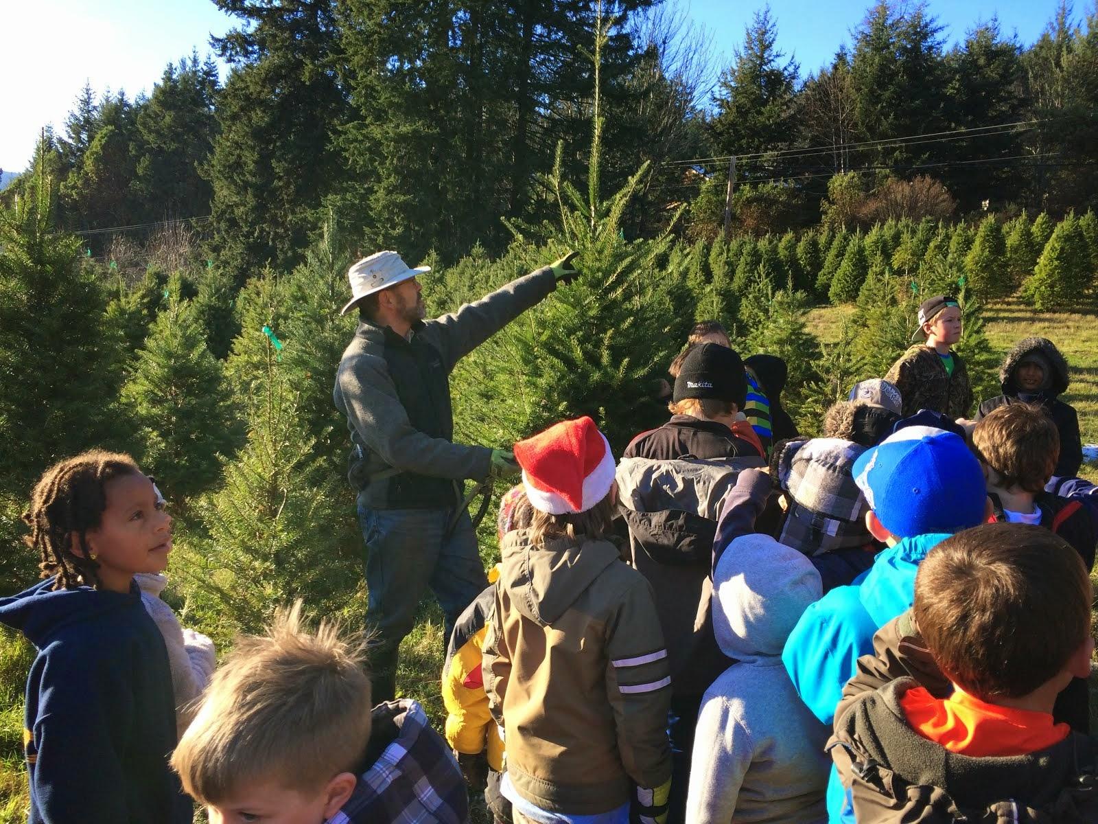 Picking a Xmas tree