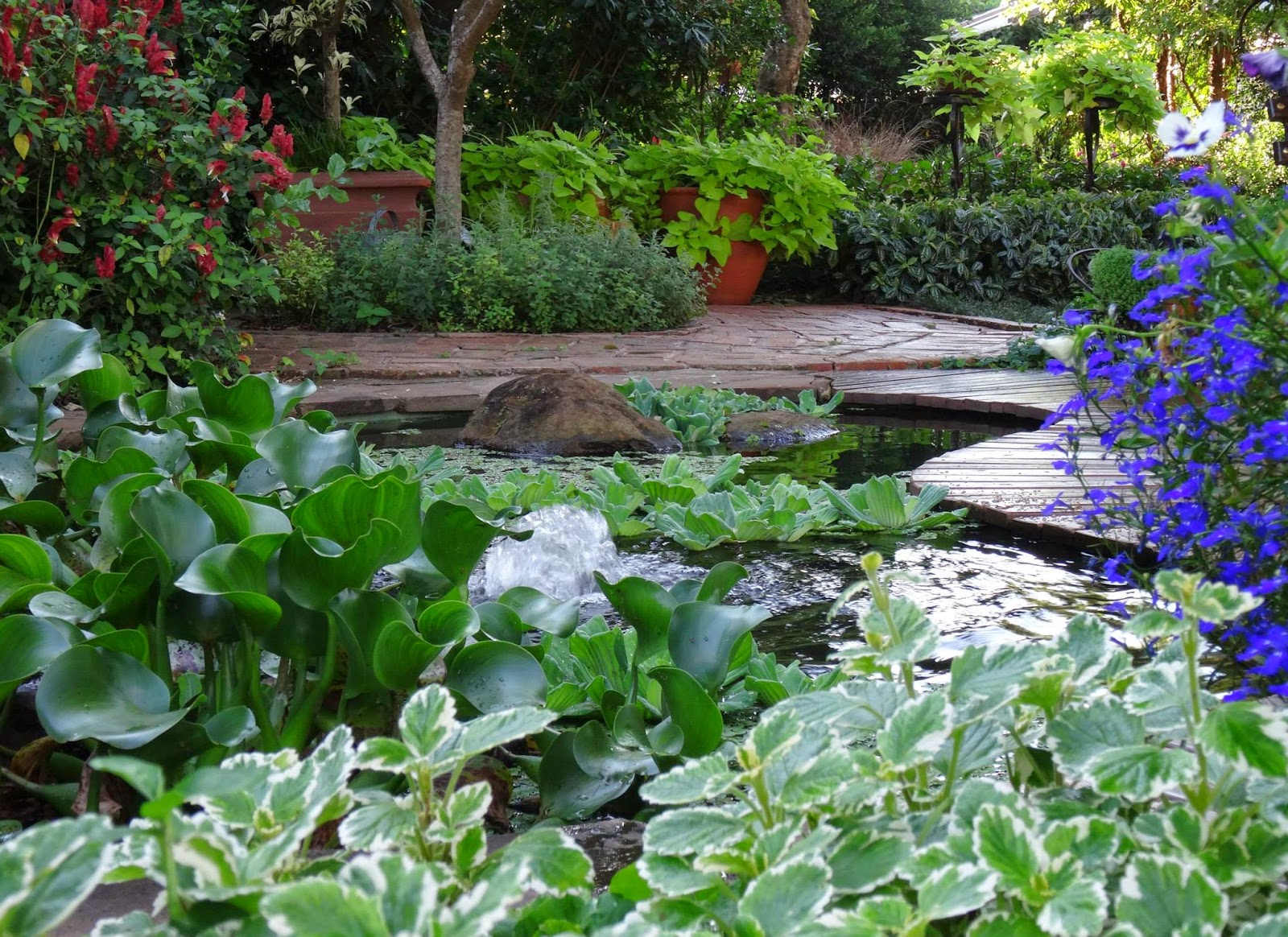 5 Things To Consider Before Building A Goldfish Pond In