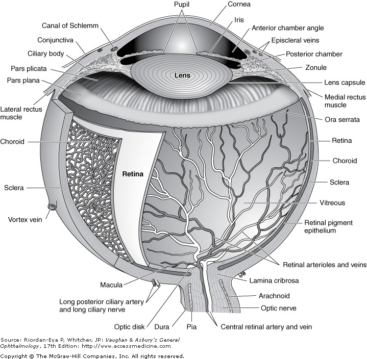 BY 411: Advanced Human Anatomy Blog: Post #8 - The Eye- Structures ...