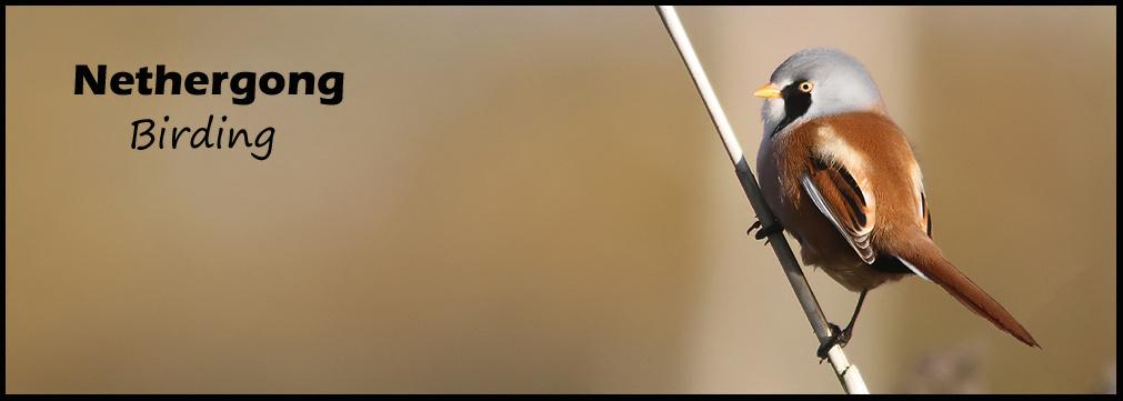 Nethergong Birding