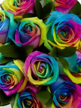 Hipper than the average flower delivery interflora 39 s for Rainbow dyed roses