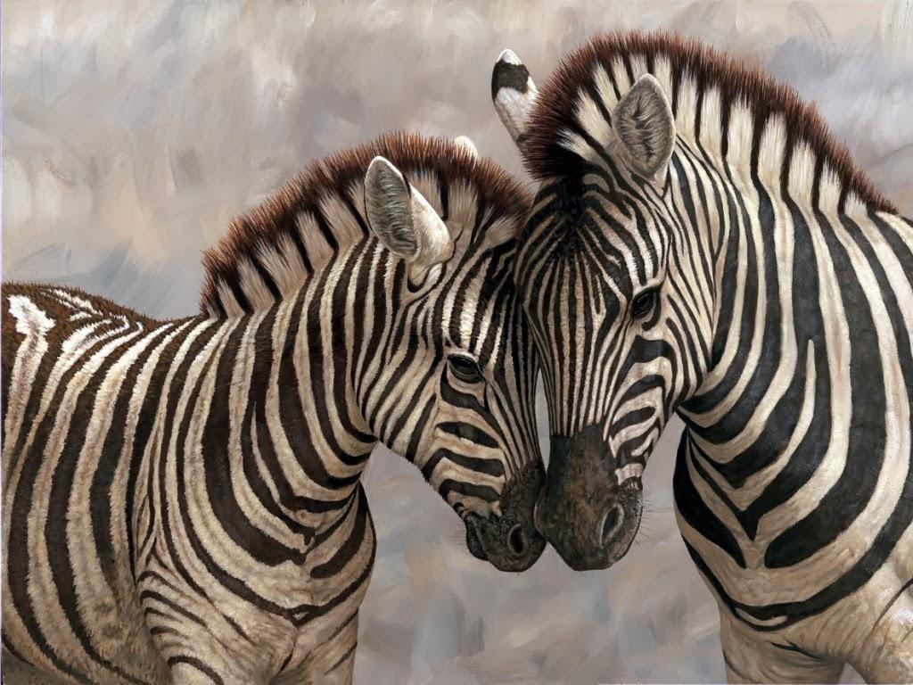 """<img src=""""http://1.bp.blogspot.com/-BmG3Hm0uLWU/UtgtCFO6FaI/AAAAAAAAITQ/KNDUP6F6W5E/s1600/animal-wallpapers-zebra-beauty.jpg"""" alt=""""Zebra wallpapers"""" />"""