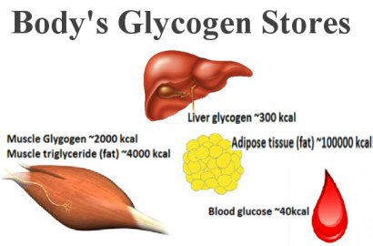 Which Type Of Food Can Be Stored As Body Fat