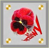 Blog odznaczony Orderem Życzliwego Bratka. DZIĘKUJĘ!