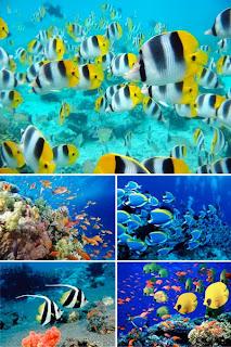 Тропические рыбки в обоях на рабочий стол