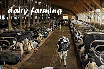 Ideas for business how to start a profitable dairy farming business - The most profitable orchards ...