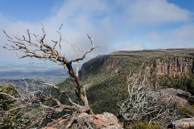 bare trees on major mitchell plateau