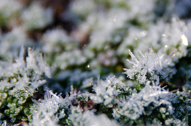 frost ice crystals sparkle twinkle bokeh