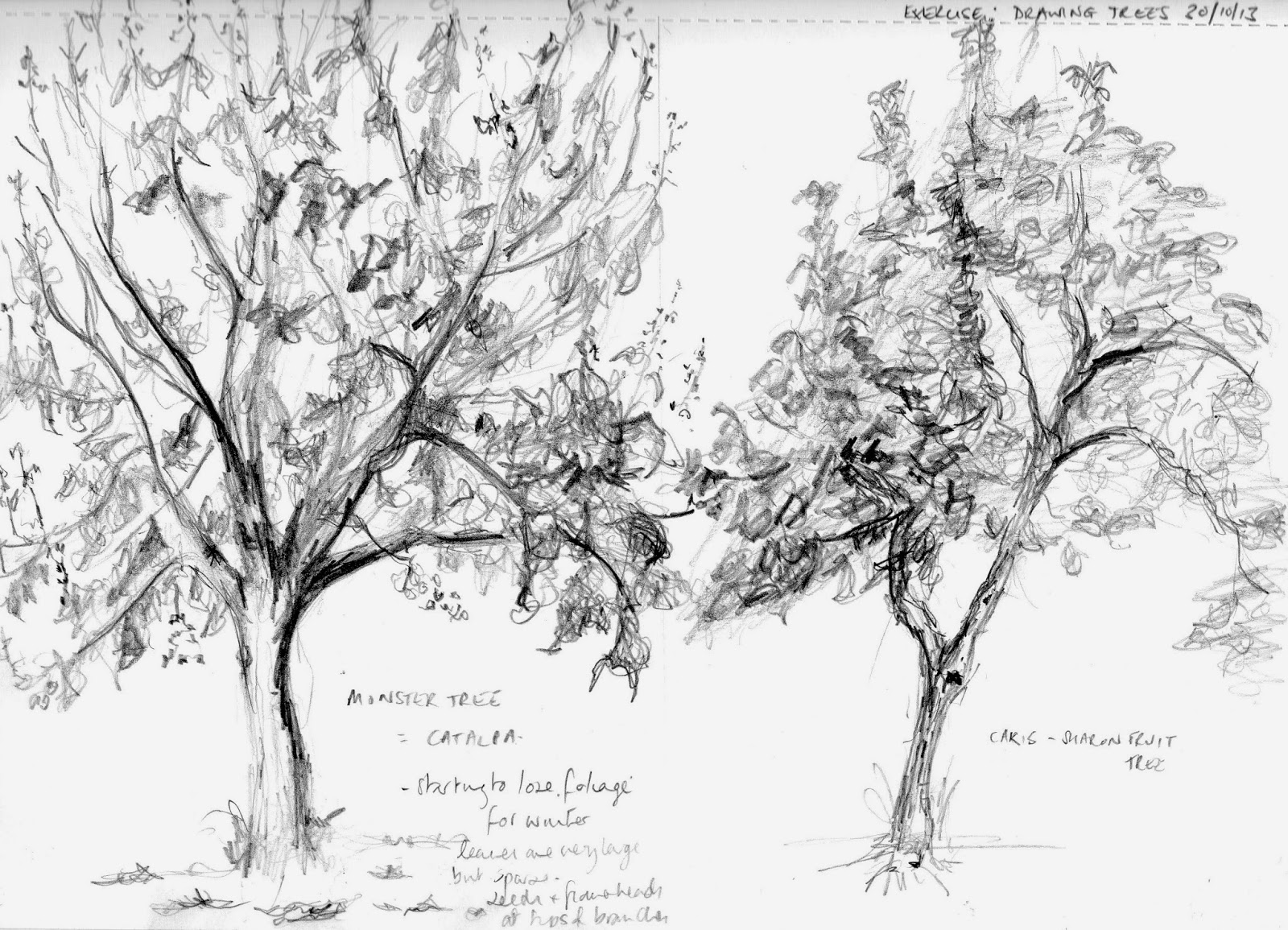 aylish u0026 39 s oca learning log  project drawing trees