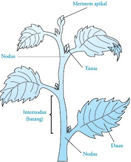 Bagian-bagian batang