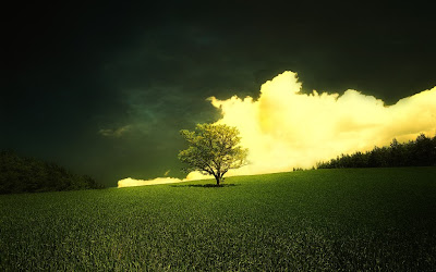 single Green Tree free desktop wallpepr