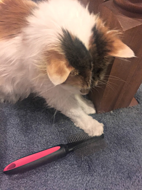 cat-playing-with-deshedding-tool
