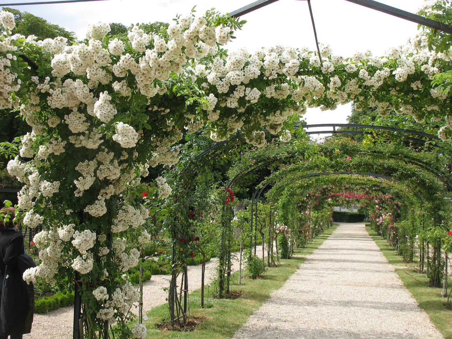 Le blog de parcs et jardins de l 39 oise roseraie de l 39 hay for Jardin roses