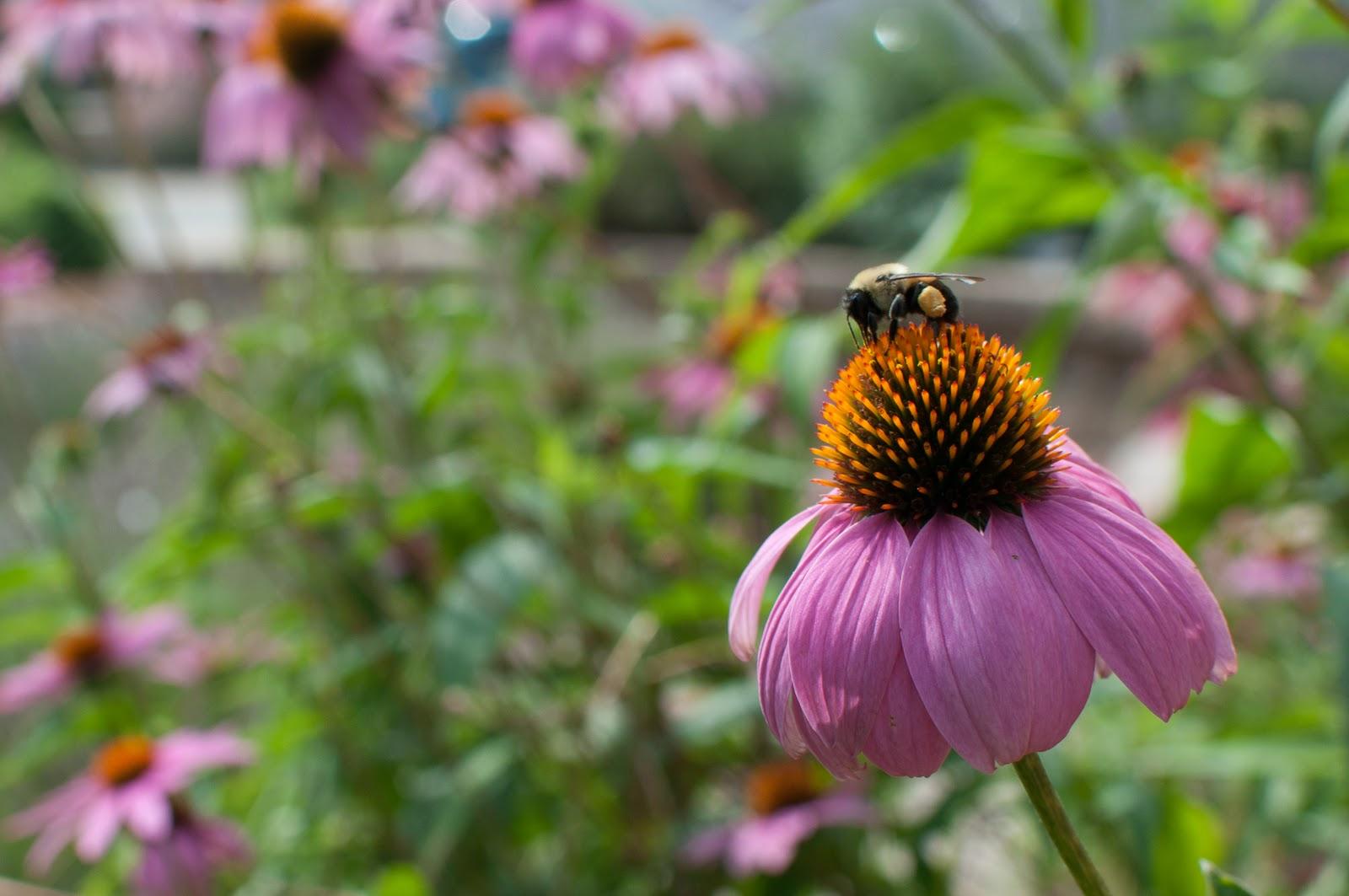 http://1.bp.blogspot.com/-BnyesNI_Ka0/TqLicWI6WxI/AAAAAAAAEKY/m_fvvOXeqpw/s1600/BeeAndFlower.jpg