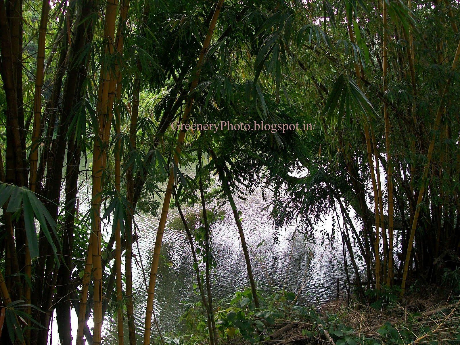 http://1.bp.blogspot.com/-BoGbpVcedZU/T81_IBxx5oI/AAAAAAAABVs/aIVgFGK9n_o/s1600/100_4749.jpg