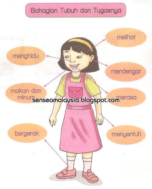 Guru mengaitkan fungsi dan kepentingan bahagian tubuh manusia.