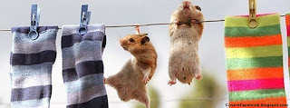 Hamsters Hanging Facebook Cover Photo