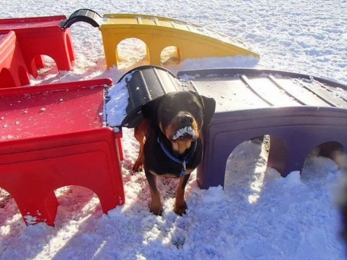 Cute dogs - part 7 (50 pics), dog playing on playground in the snowy day