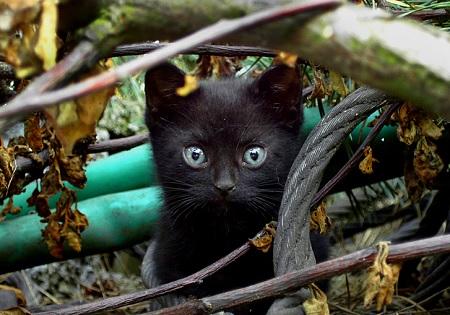 Mơ thấy vuốt ve mèo đen đã chết