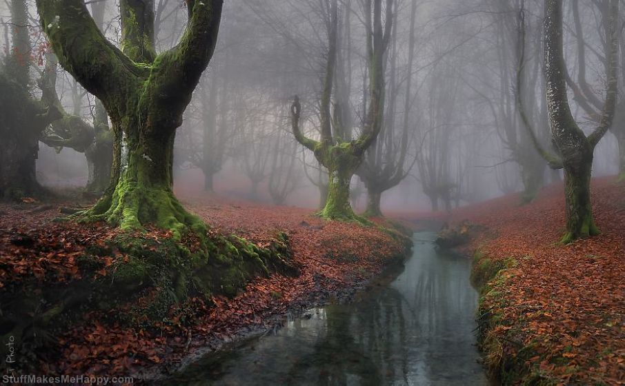 Otzarreta Forest in Spain
