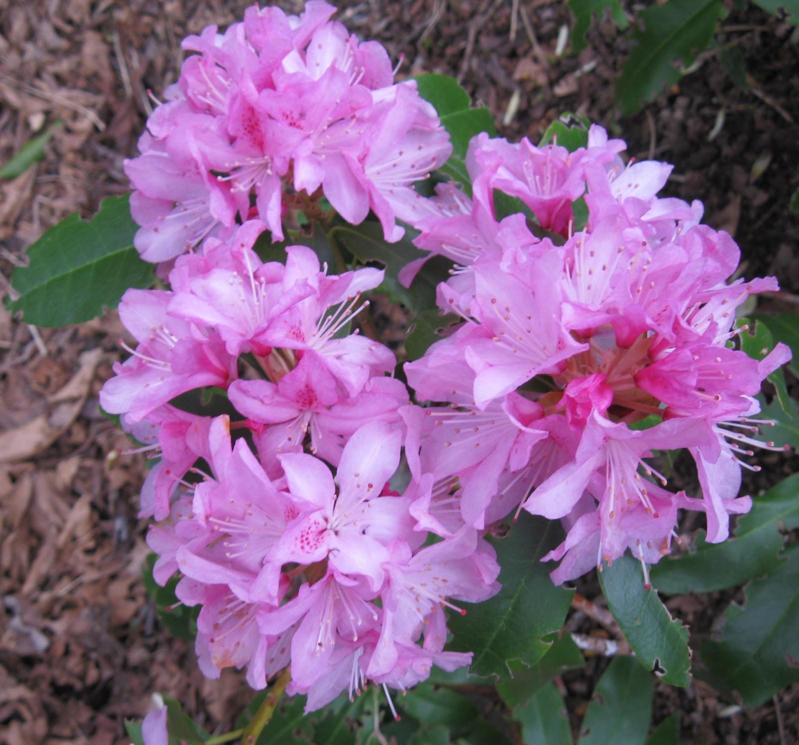 I O U Washington State Flower
