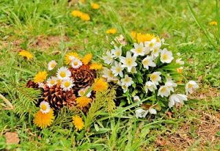 flori si conifere belis