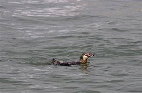 Penguin 337