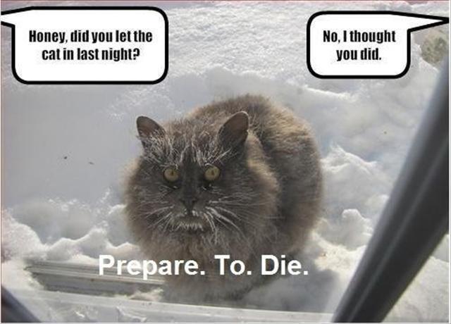 pissed+cat.jpg