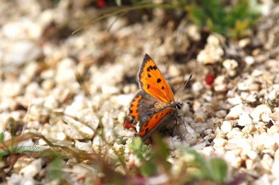 Dehesa de la villa naturaleza viva manto bicolor las for Villas las mariposas