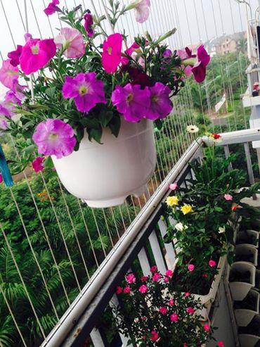 Chậu nhựa trồng hoa móc treo trang trí hành lang
