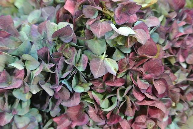 New Covent Garden Flower Market hydrangea purple