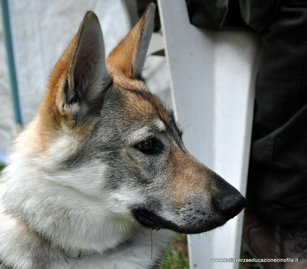 Katia verza i cani secondo me gioco rinforzo positivo - Un altro modo per dire porta ...