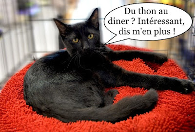 Chat tout noir sur dodo rouge.