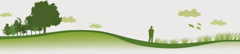 Descubre el verde