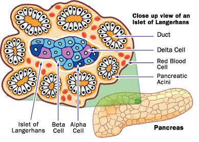 secretion definition biology